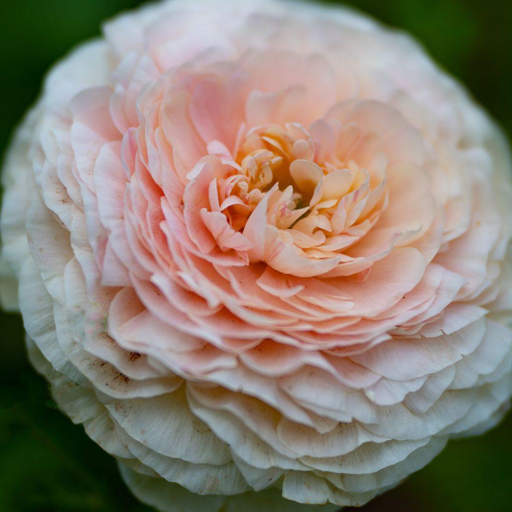 Flower photography by Debbie Devereaux