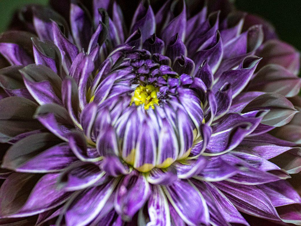 Photographed at April's Garden, Durango Colorado
