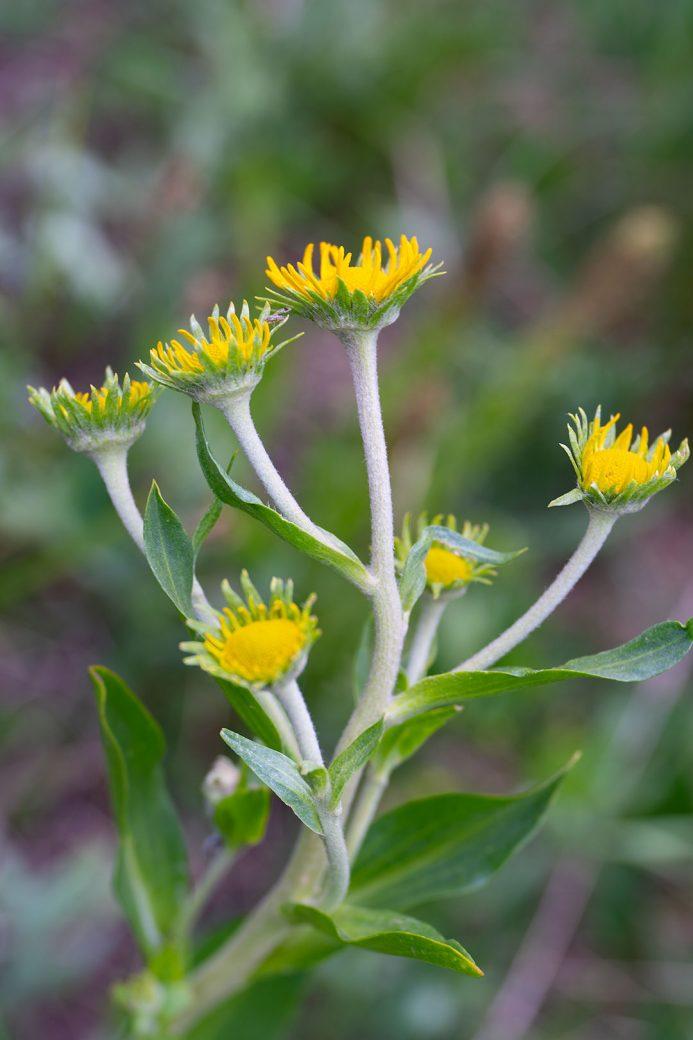 Colorado wildflowers. Image by Debbie Devereaux Photography