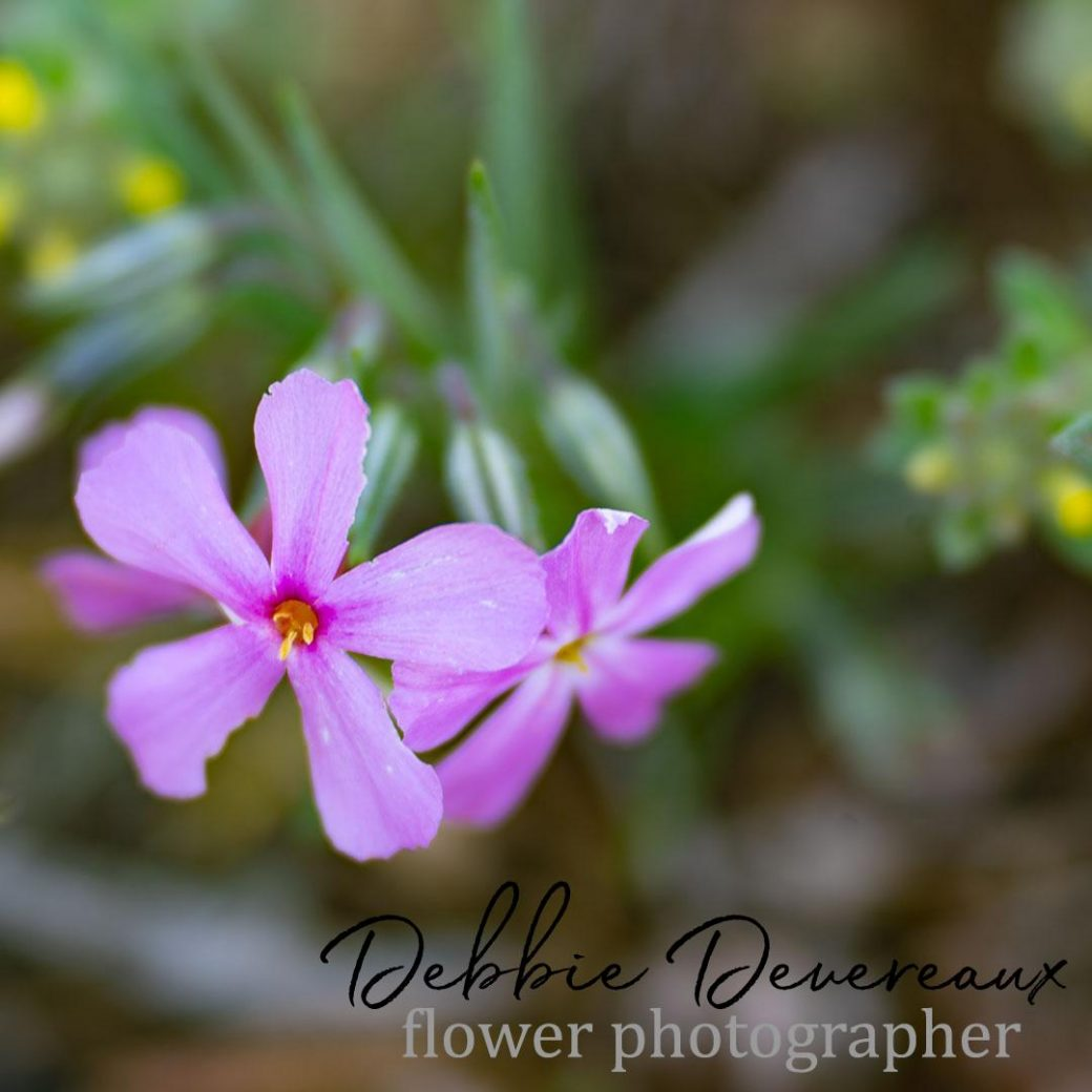wildflower Image Copyright Debbie Devereaux