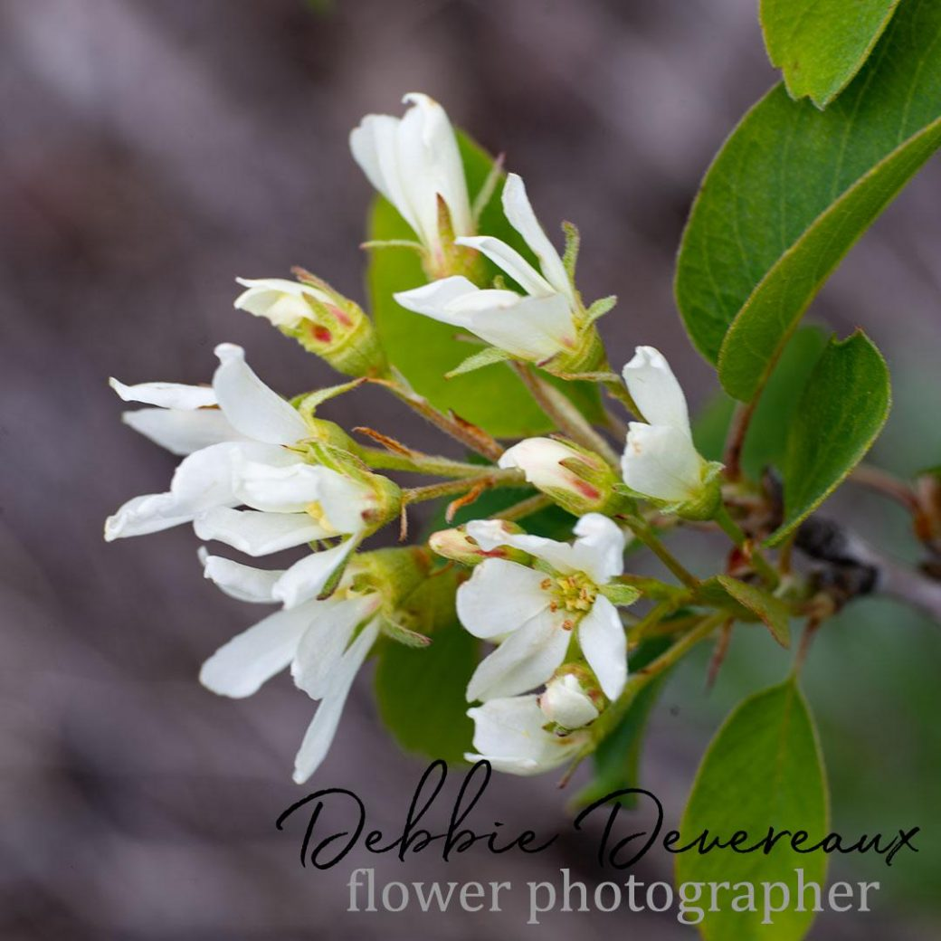 wild shrub Image Copyright Debbie Devereaux