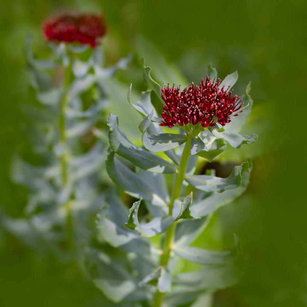 Wildflowers in the San Juan Mountains - Durango, Colorado. Image copyright Debbie Devereaux photography