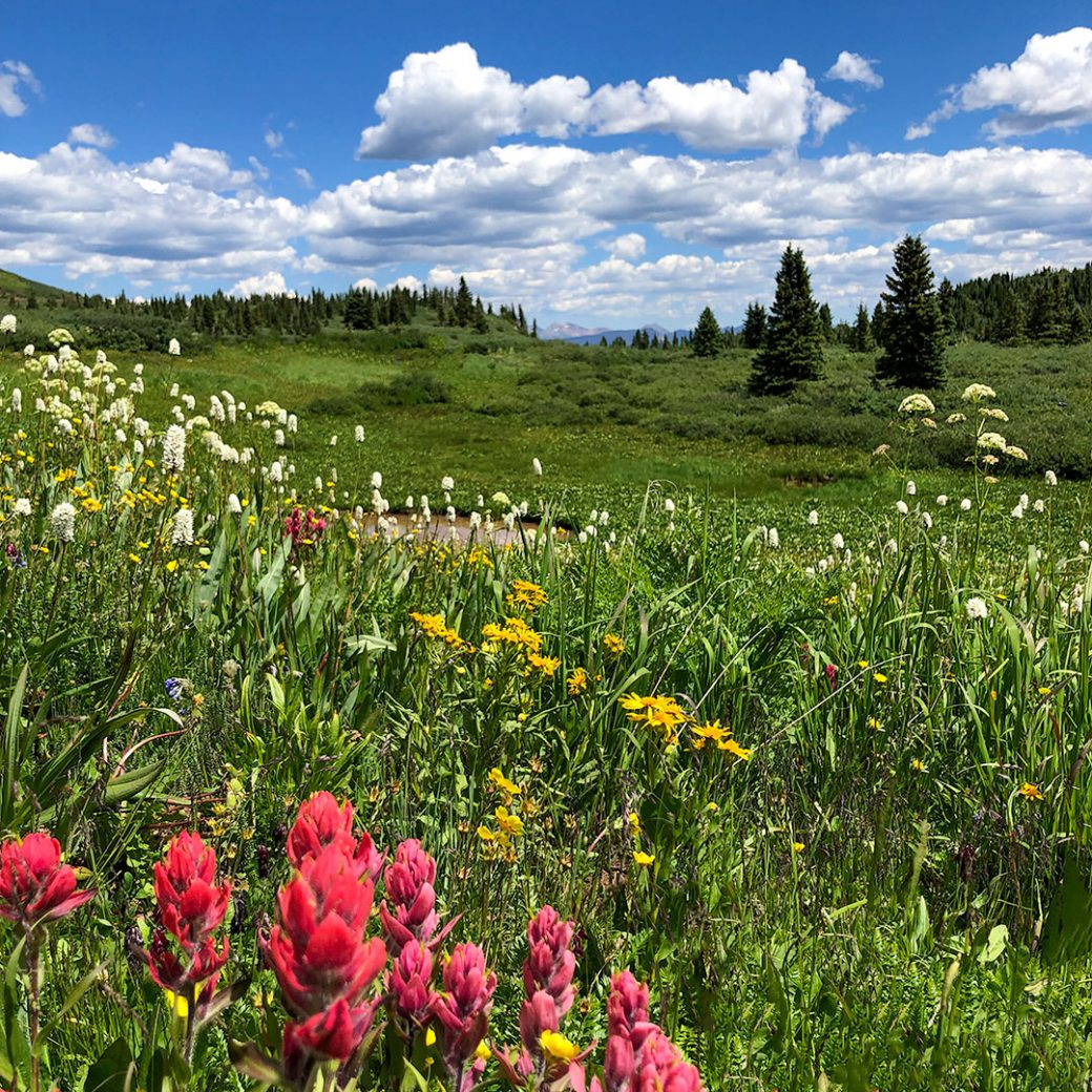 Colorado wildflowers - Copyright Debbie Devereaux Photography